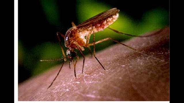 New Case of West Nile Virus, One New Case of Chikungunya Virus in MS