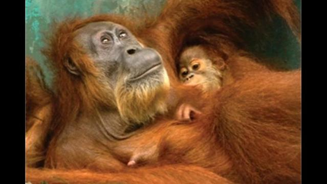 Do you know the 'Snack Food 20' companies behind the destruction of palm forests and orangutans?