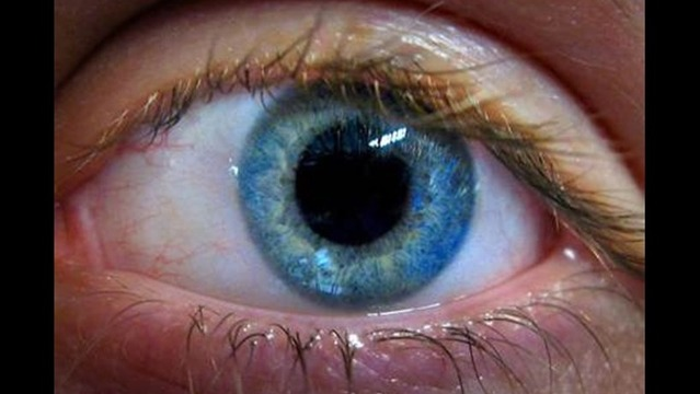 Eye in a Dish: Researchers Make Retina From Stem Cells
