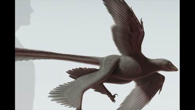 Flying Dino? Bizarre Dinosaur Had 4 'Wings,' Long Tail Feathers