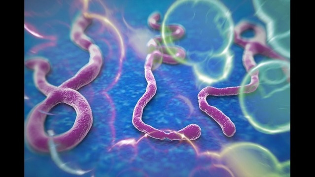 Ebola Is Here: 5 Reasons Not To Panic