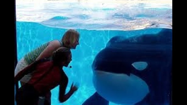 After Stock Plummets, SeaWorld Announces New Orca Environment