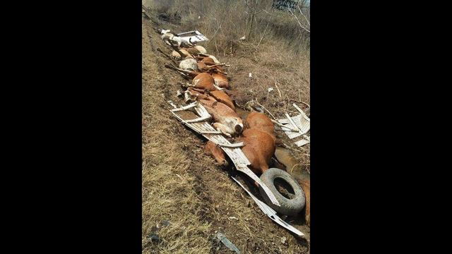 18 horses dead after truck carrying livestock overturns