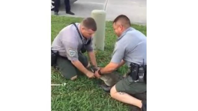 Wildlife and Fisheries agents capture and arrest alligator in Louisiana