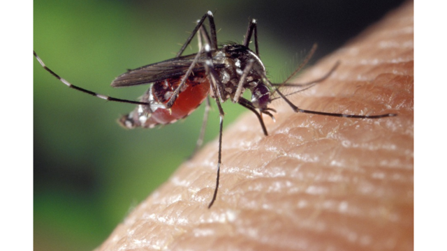 First West Nile Virus Death in Dallas County Reported by Health Officials