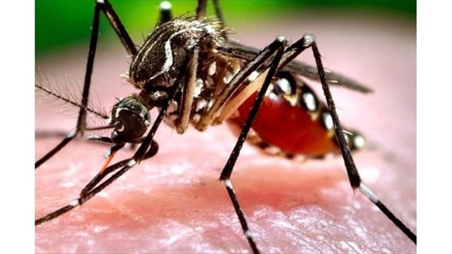 7 areas test positive for West Nile in Ouachita Parish