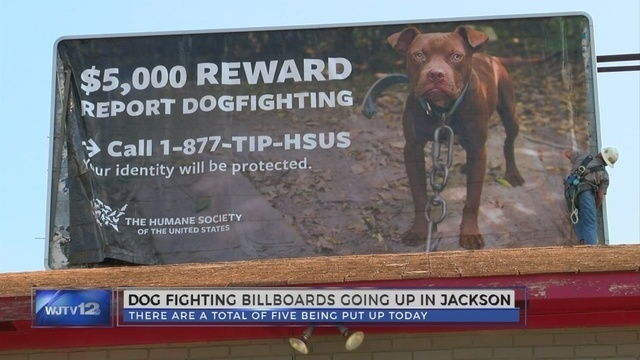 Animal rights advocates take to the boards to make a point on dog fighting